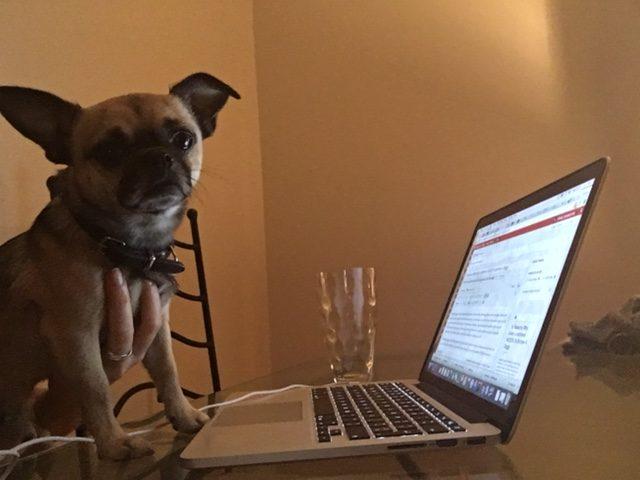 borrow-my-doggy-london
