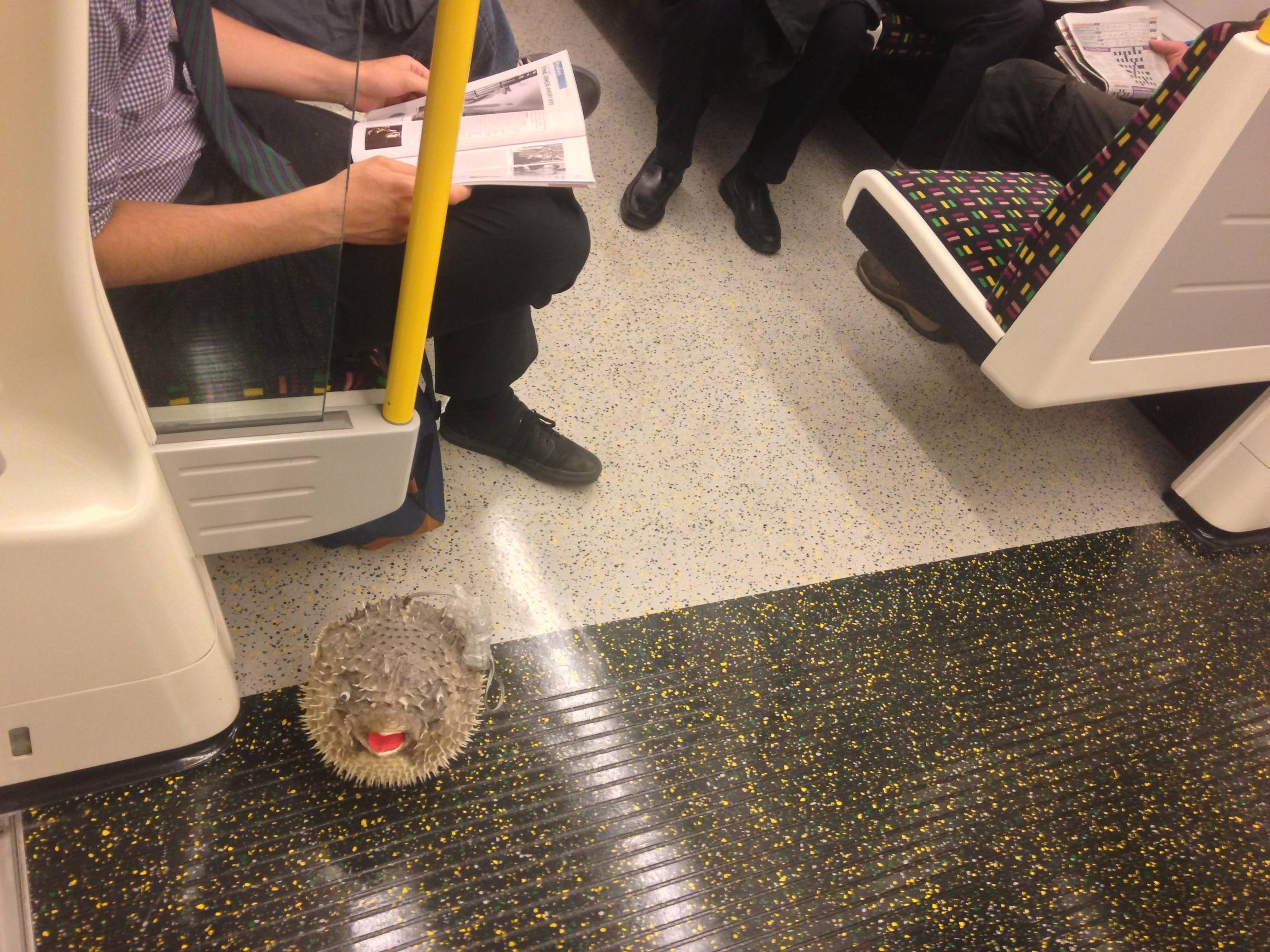 Fish appear to be travelling by trains an increasing amount. I saw this Puffer Fish on the tube in London over the weekend - Imgur