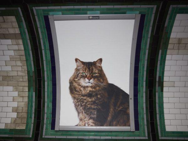 cats-at-clapham