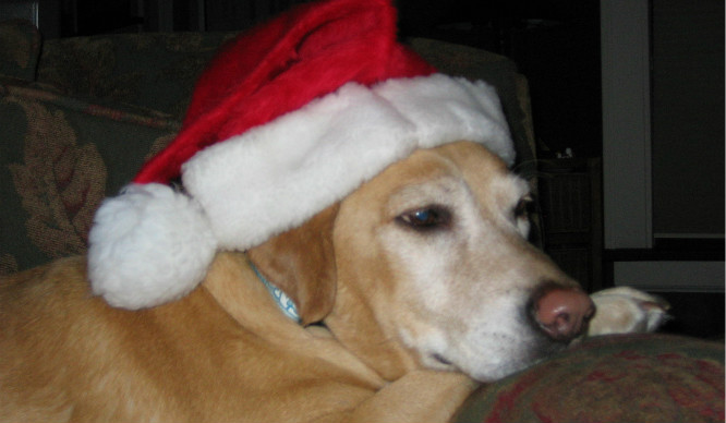 dog-in-a-santa-hat