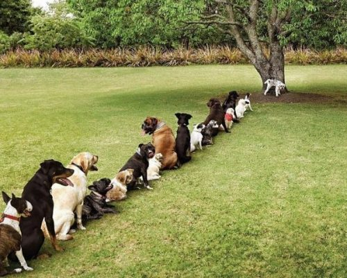 dogs-queuing-funny-london-weird