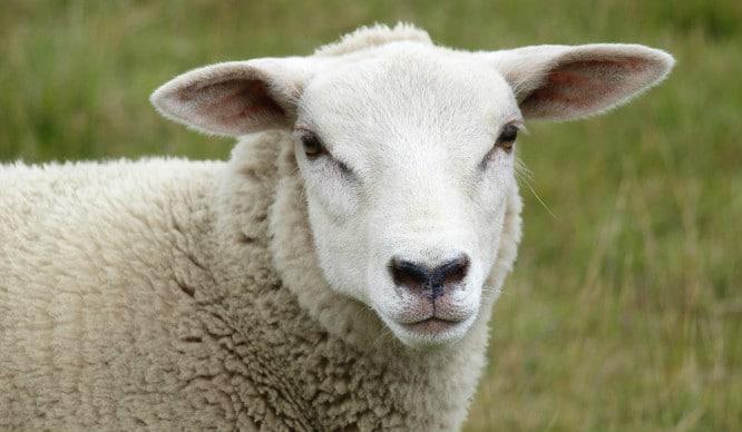 sheep-cafe-london