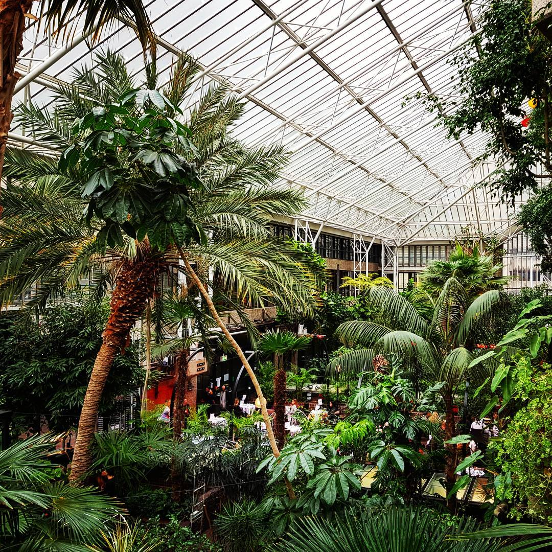 Barbican Conservatory London S Beautiful Indoor Rainforest