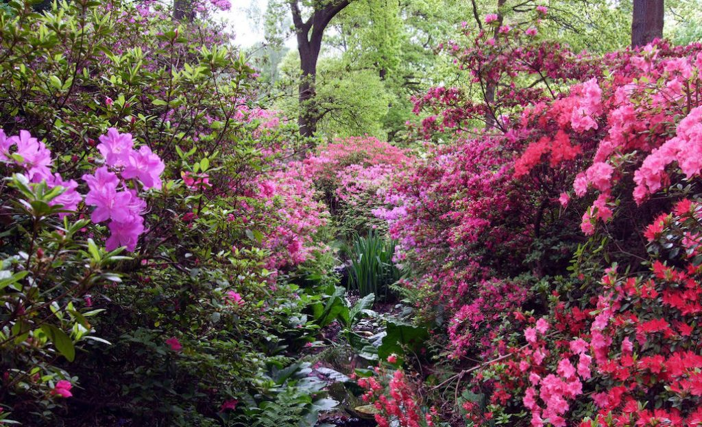 Isabella Plantation, London (Photo: Jim Linwood)