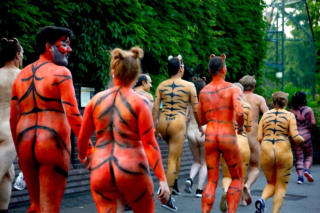 London Zoo Streak For Tigers