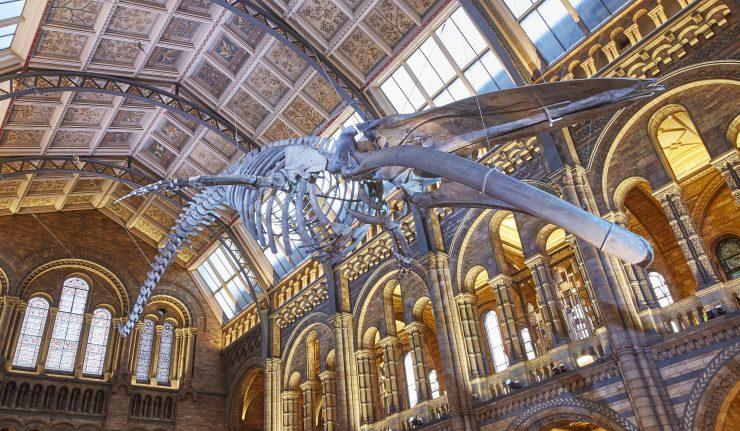 Blue Whale Hintze Hall