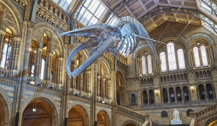 © The Trustees of the Natural History Museum, London