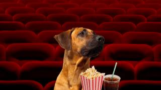 dog-cinema