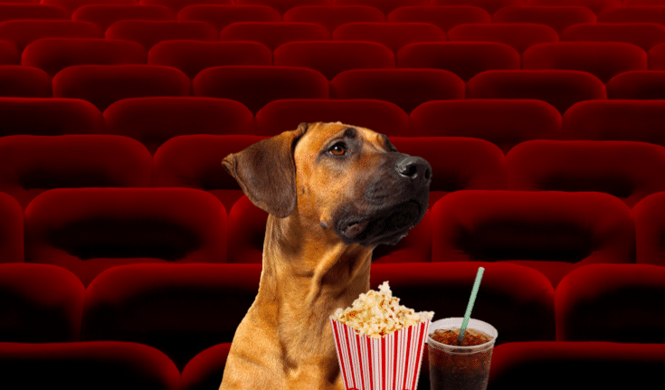 dog-cinema
