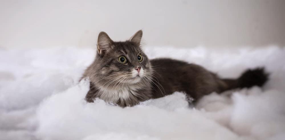 cat-festival-london-kitten