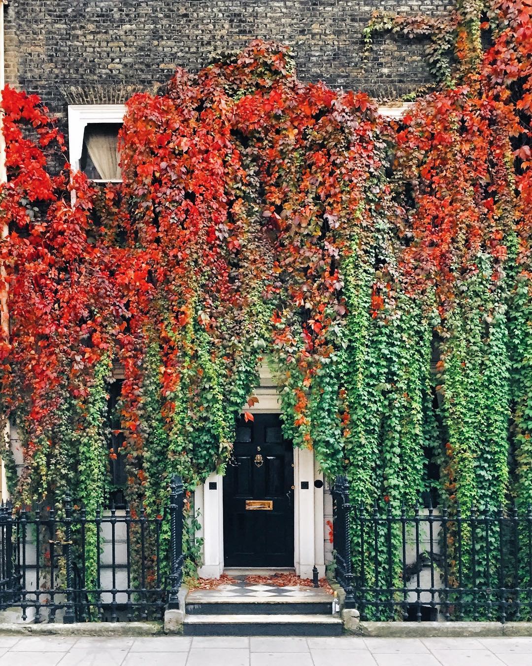 Autumn photo ivy door