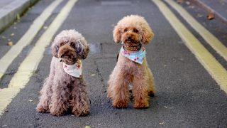 Dogs In London