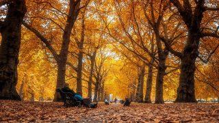 Green park autumn