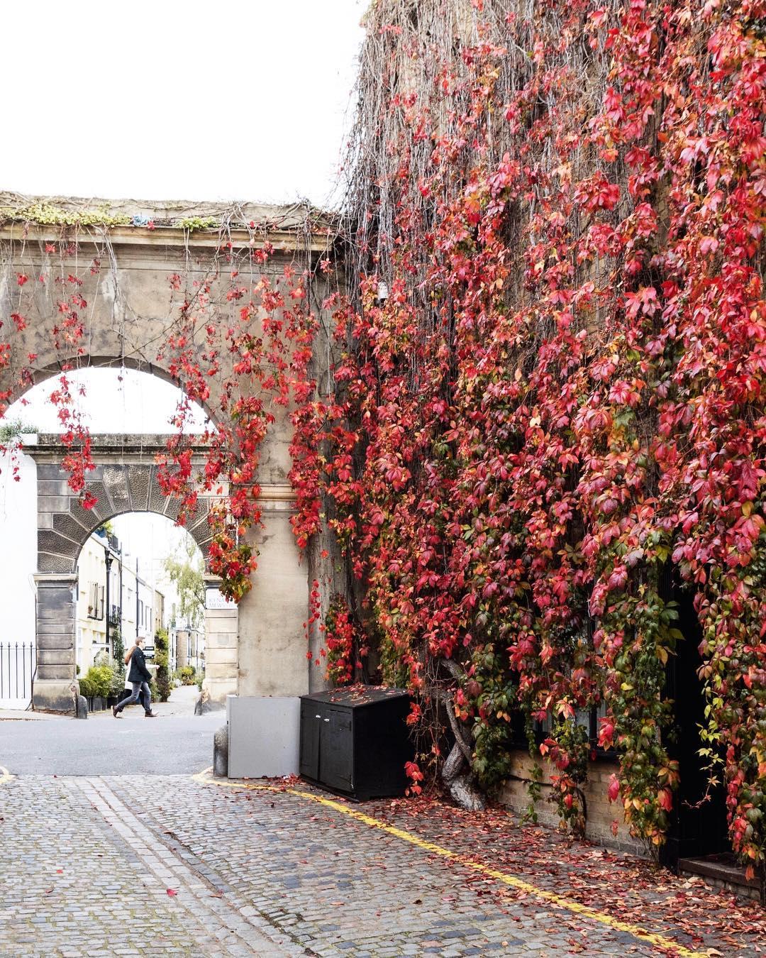 London autumn photograph, sparrowinlondon mews