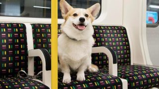 dogs-on-the-tube