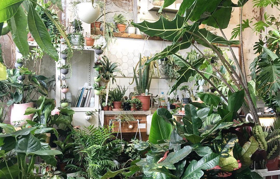 conservatory-archives-london-hackney-plants