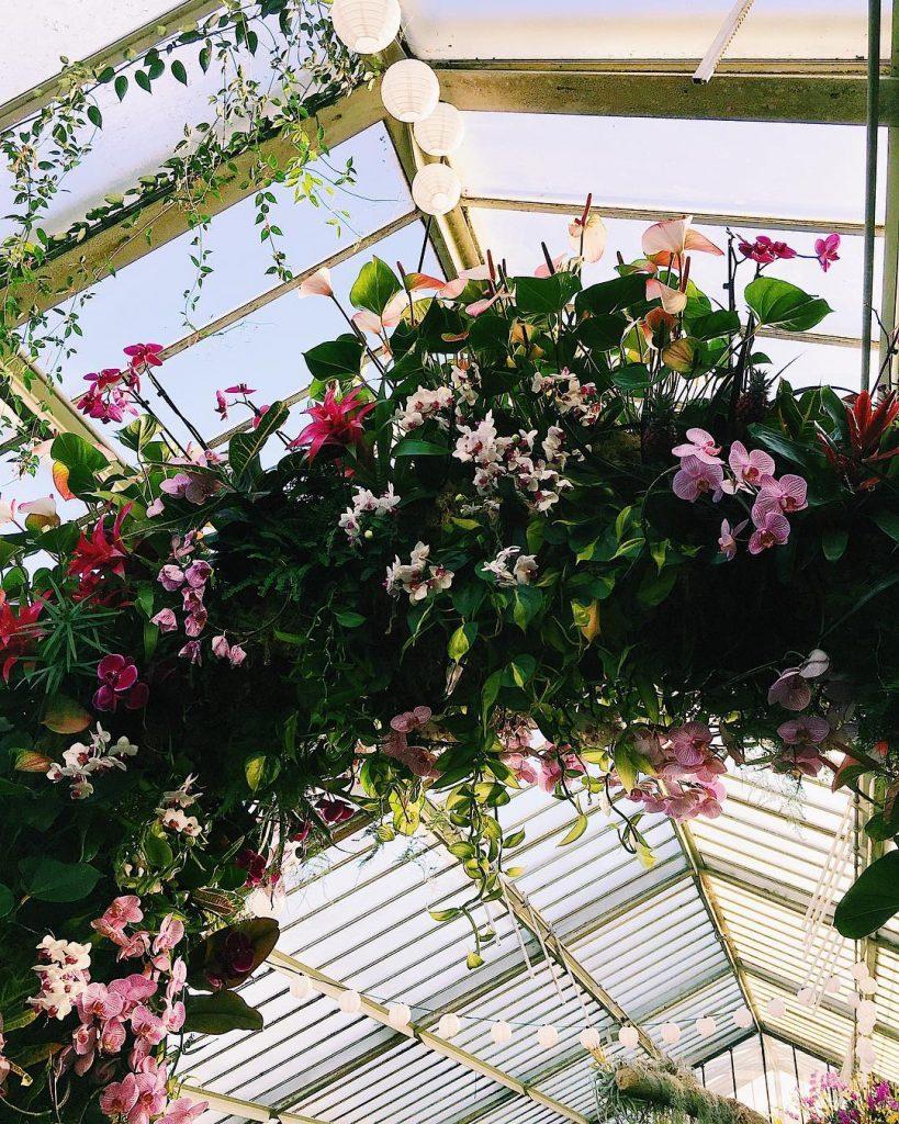 orchids-11