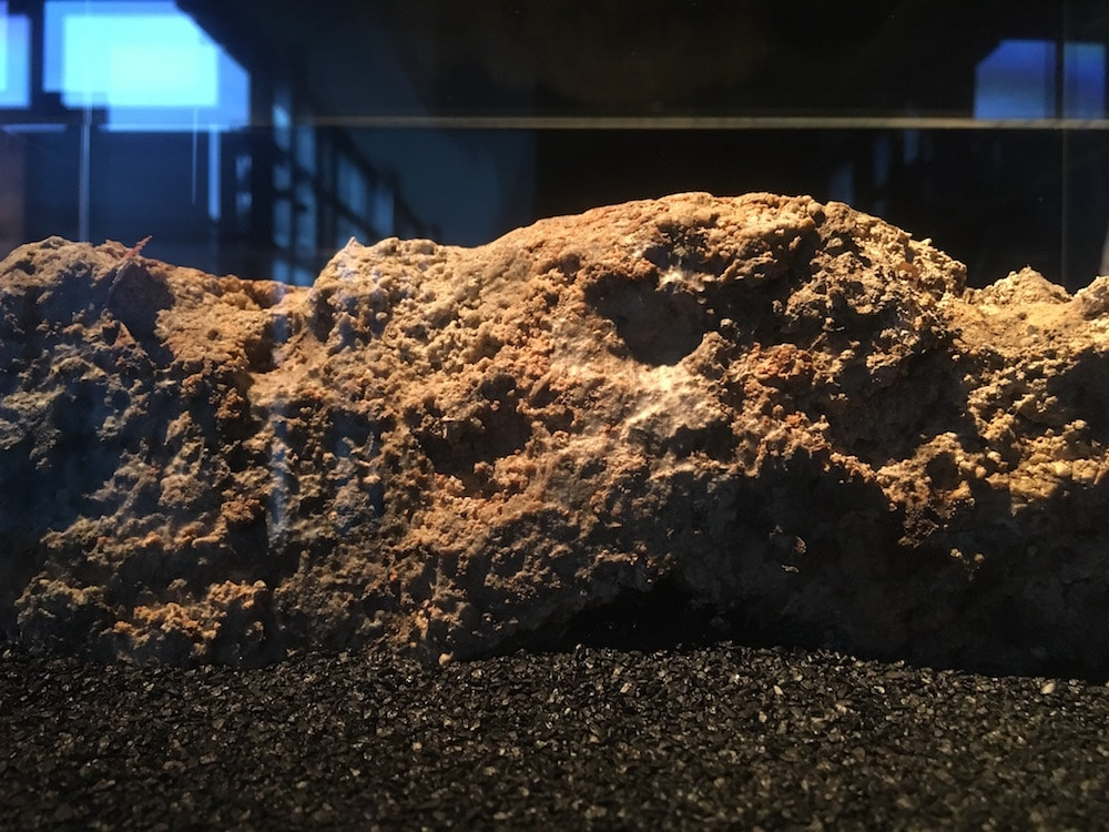 Fatberg Exhibit London
