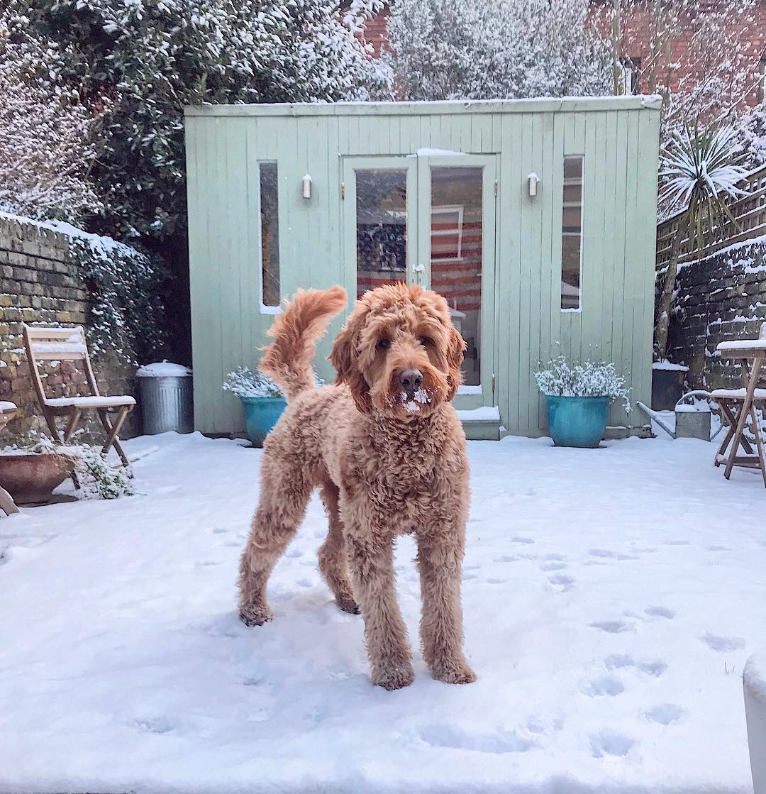 snow-dog-london