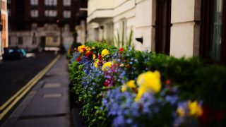 Flowers London guide locations calendar