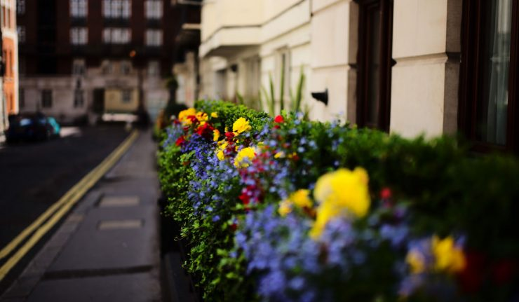 Flower guide to london where to see daffodils blossom wisteria in flowers london guide locations calendar mightylinksfo