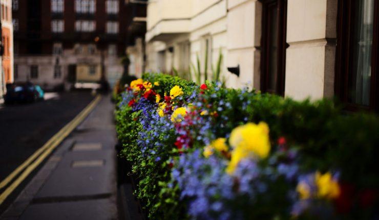 Flowers London guide locations calendar