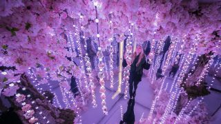 cherry-blossom-london-exhibition