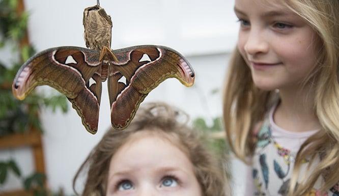 Butterflies exhibition London