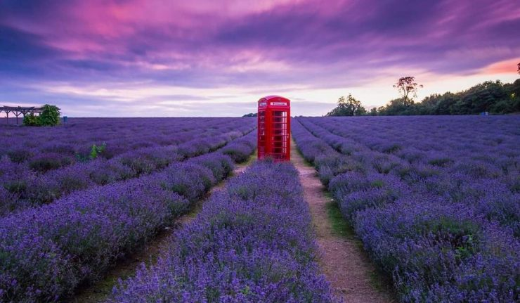 London's Incredible Lavender Field Is Reopening For Summer 2019 • Mayfield Lavender Farm