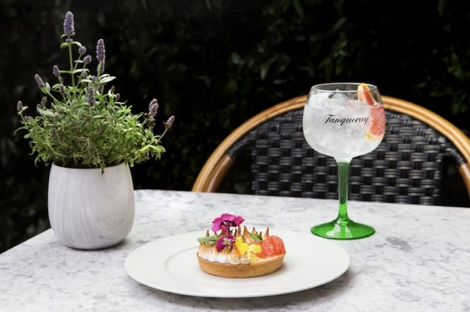 Tanqueray Gin Drink Photo