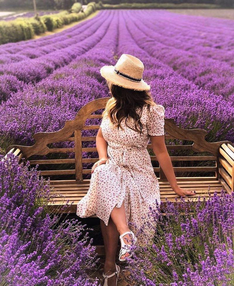 Hop Shop Lavender