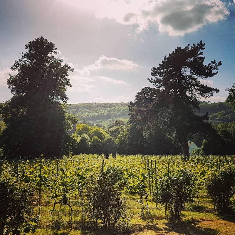 Mount Vineyard Kent