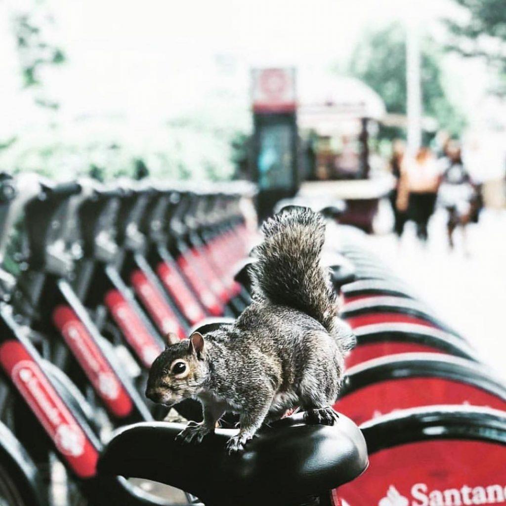 Bike Hire London Santander Cycles