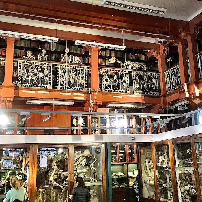 Grant Museum In London