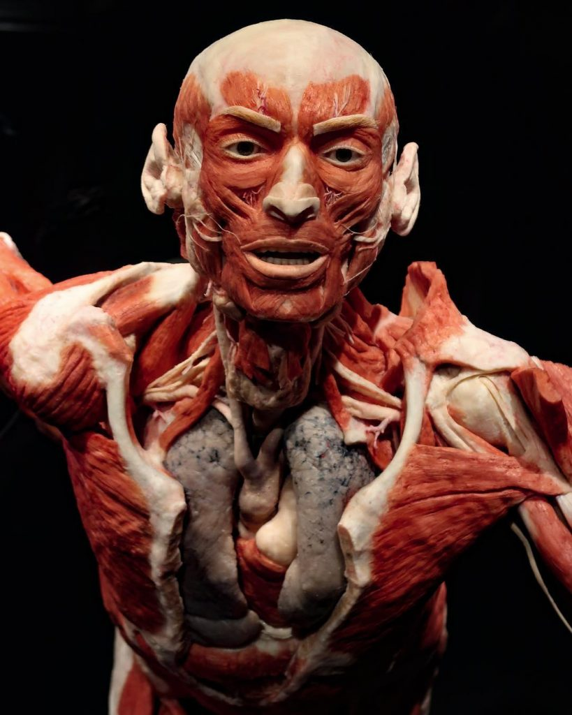 Body Worlds The Groundbreaking Exhibit That Looks Inside The Human Body