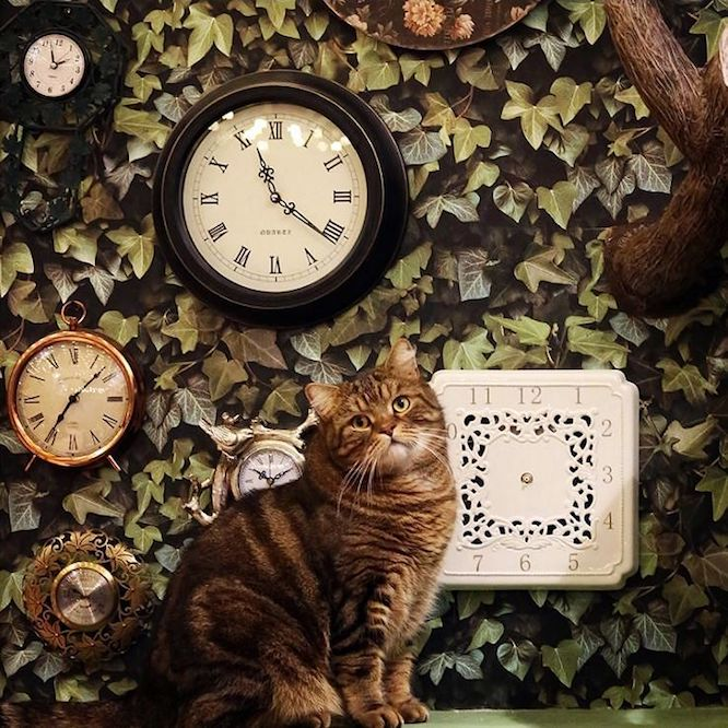 London Cat Cafe