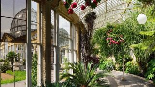 Syon-park-london-guide