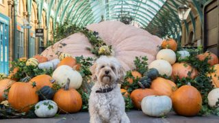 covent-garden-pumpkin-london