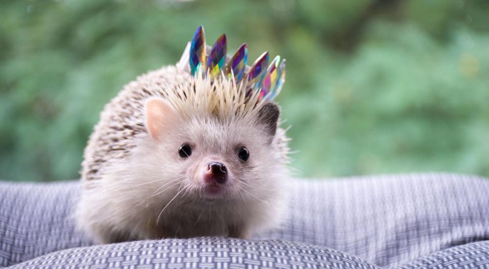 hedgehog-festival-london-hackney
