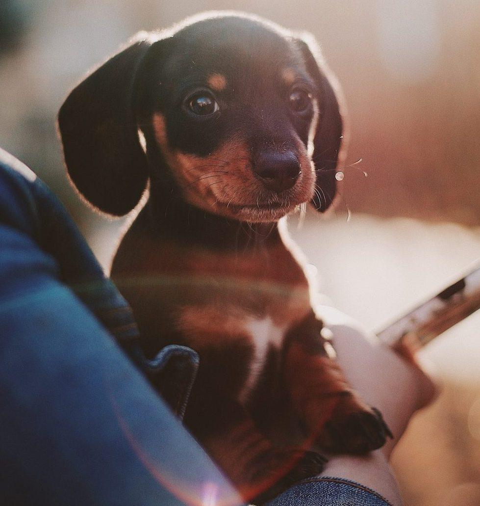 puppy-cuddle-pop-up