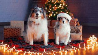 christmas-gifts-dog-lovers