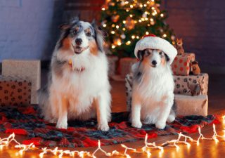 christmas-gifts-dog-lovers