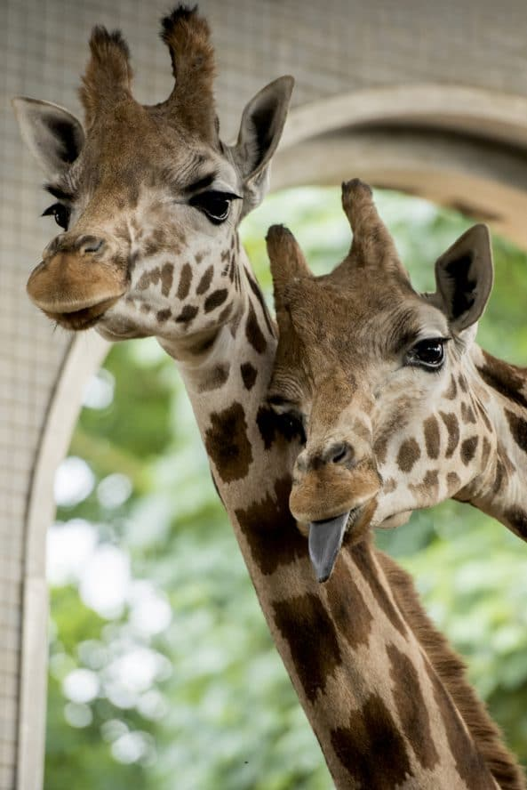 Check Out The New Baby Animals At Zoo Nights This June And July