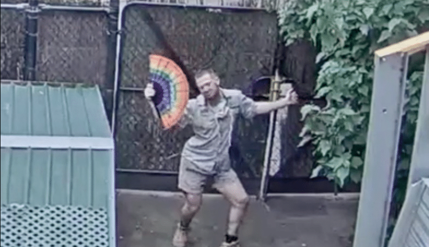 A Melbourne Zookeeper Was Caught Dancing On A Live Cam, And He's ...