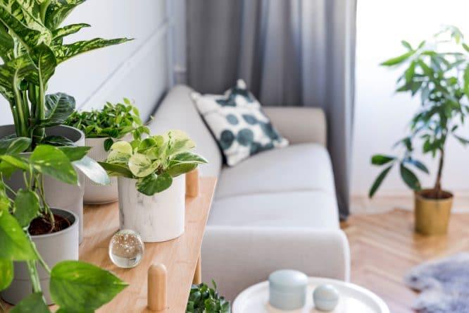 House Plants 1