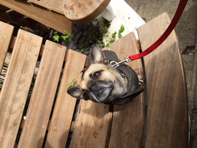 borrow-my-doggy