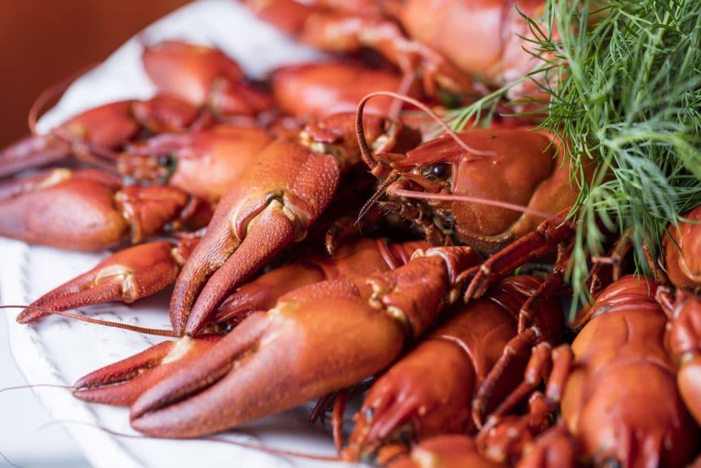 aster-crayfish