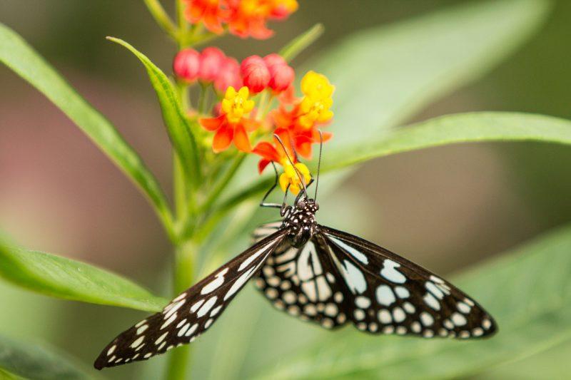 butterfly-london-zoo
