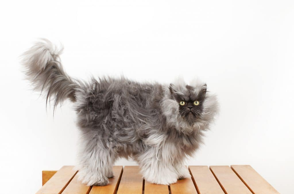 We're almost as excited as Colonel Meow