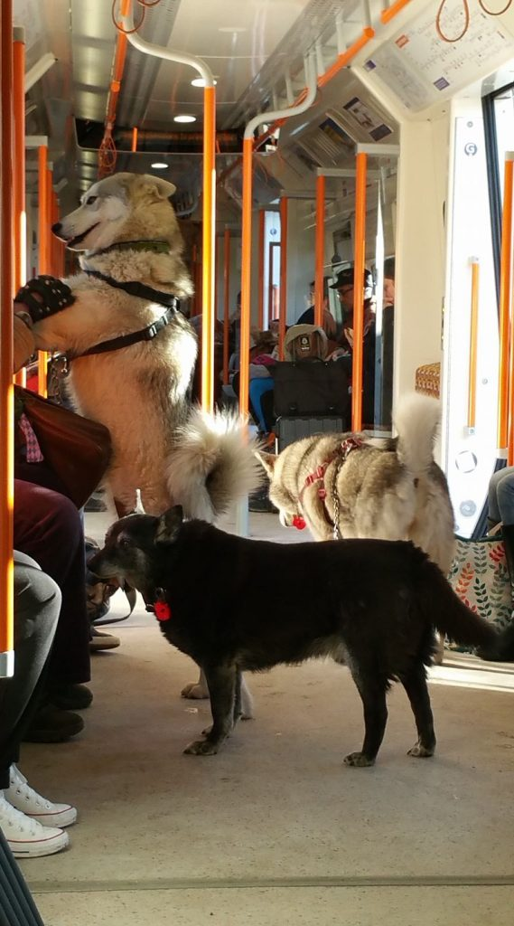 Dogs on the London Overground